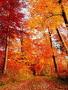 Autumn Orange Road wallpapers