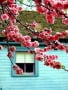 Lovely Flower Colors wallpapers