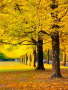 Yellow Autumn Garden wallpapers