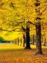 Yellow Autumn Garden wallpapers