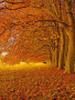 Beautiful Autumn Lausanne Switzerland wallpapers