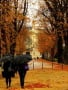 Autumn Nature In Paris wallpapers