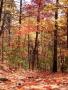 Fall Autumn Jungle wallpapers