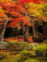 Colors Autumn Leaves wallpapers