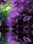 Purple Japanese Garden wallpapers