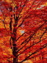 Red Maple Crandon Wisconsin wallpapers
