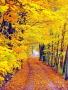 Autumn Twist wallpapers