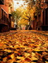 Autumn Philadelphia Pennsylvania wallpapers