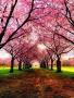 Pink Tree Way wallpapers