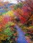 Colors Autumn Walk wallpapers