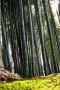 Green Bamboo Nature IPhone Wallpaper wallpapers
