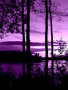 Violet Nature wallpapers
