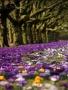 Fall Purple Flowera wallpapers