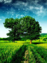 Green Field Nature wallpapers