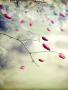Beautiful Flower Bokeh wallpapers