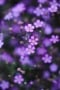 Purple Flowers On Garden IPhone Wallpaper wallpapers