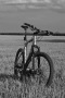 Gray Field On Bicycle IPhone Wallpaper wallpapers