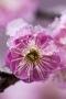 Pink Flower Cute IPhone Wallpaper wallpapers
