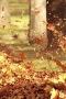 Golden Leaves IPhone Wallpaper wallpapers