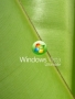 Windows  Free Mobile Wallpapers