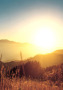Nice Light Of Sun wallpapers