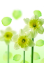 Green Flower wallpapers