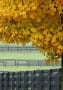 Autum wallpapers