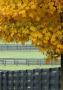 Autumne wallpapers