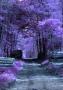 Purple Haze wallpapers