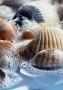 Sea Shells wallpapers