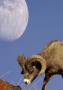 Animal And Big Moon Iphone Wallpaper wallpapers