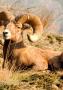 Animal Sit IPhone Wallpaper wallpapers