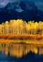Quaking Aspen wallpapers