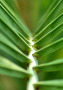 Palmleaf wallpapers