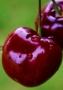 Red Cherries wallpapers