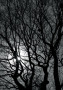 Trees At Night wallpapers