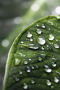 Dew Drops wallpapers