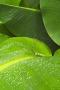 Leaf Closeup wallpapers