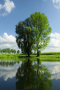Green Scenery wallpapers