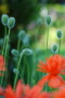 Growing Plants wallpapers