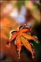 Leaves In Water IPhone Hd Wallpaper wallpapers
