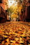 Oranges Autumn Philadelphia IPhone Wallpaper wallpapers
