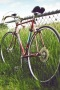 Bicycle In Field IPhone Wallpaper wallpapers