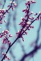 Peach Blossom IPhone Wallpaper wallpapers