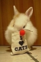 I Love Cat Hare IPhone Wallpaper wallpapers