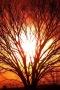 Sunlight Through Trees IPhone Wallpaper wallpapers