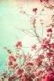Bougainvillea Flowers IPhone Wallpaper wallpapers