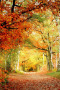 Autumn Way & Leaves IPhone Wallpaper wallpapers
