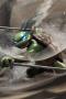 Ninja Turtles Fighter Iphone Wallpaper wallpapers