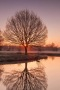 Sunset Tree Reflection IPhone Wallpaper wallpapers
